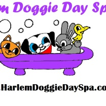harlem doggy day spa
